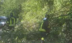 Vigili del fuoco Alberi